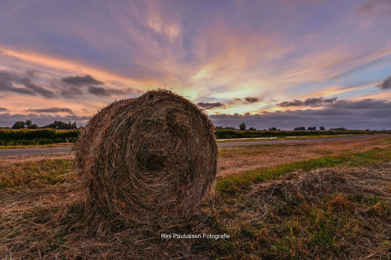 In de polder Kethel