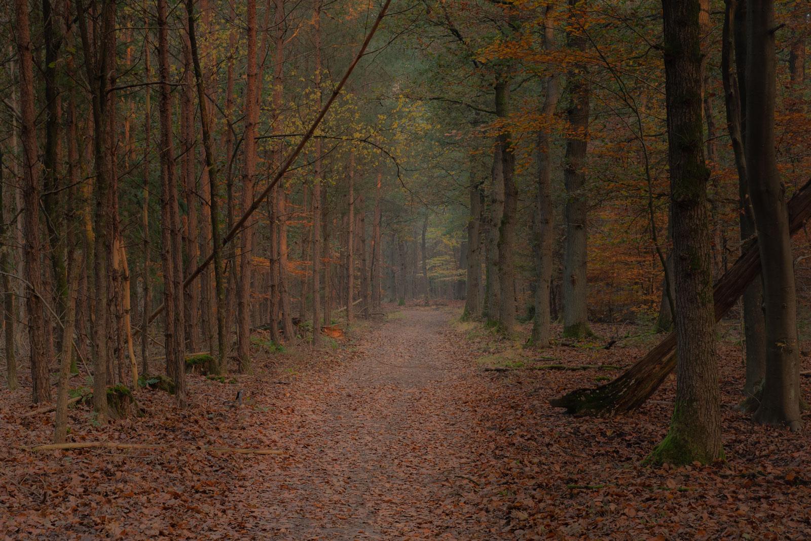 Leuvenumse Bos in een mysterieuze  sfeer_4870