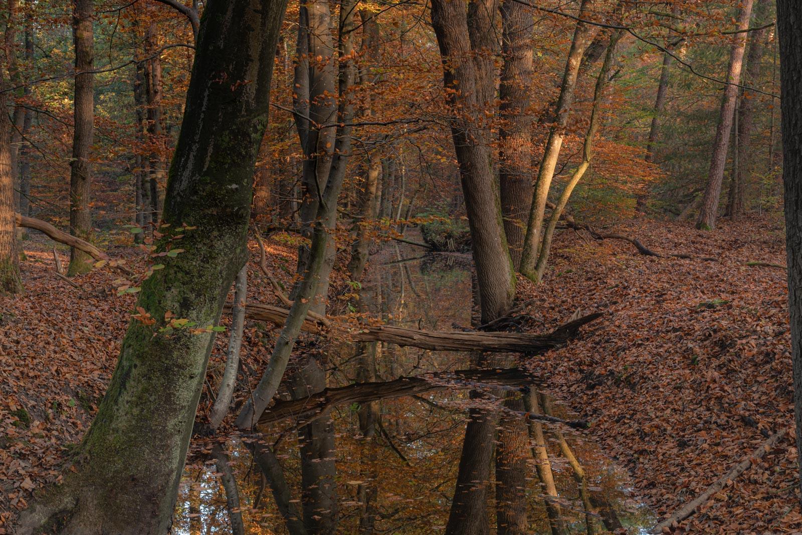 Gallery-Natuur Leuvenumse Bos in de vroege ochtend zon 4911