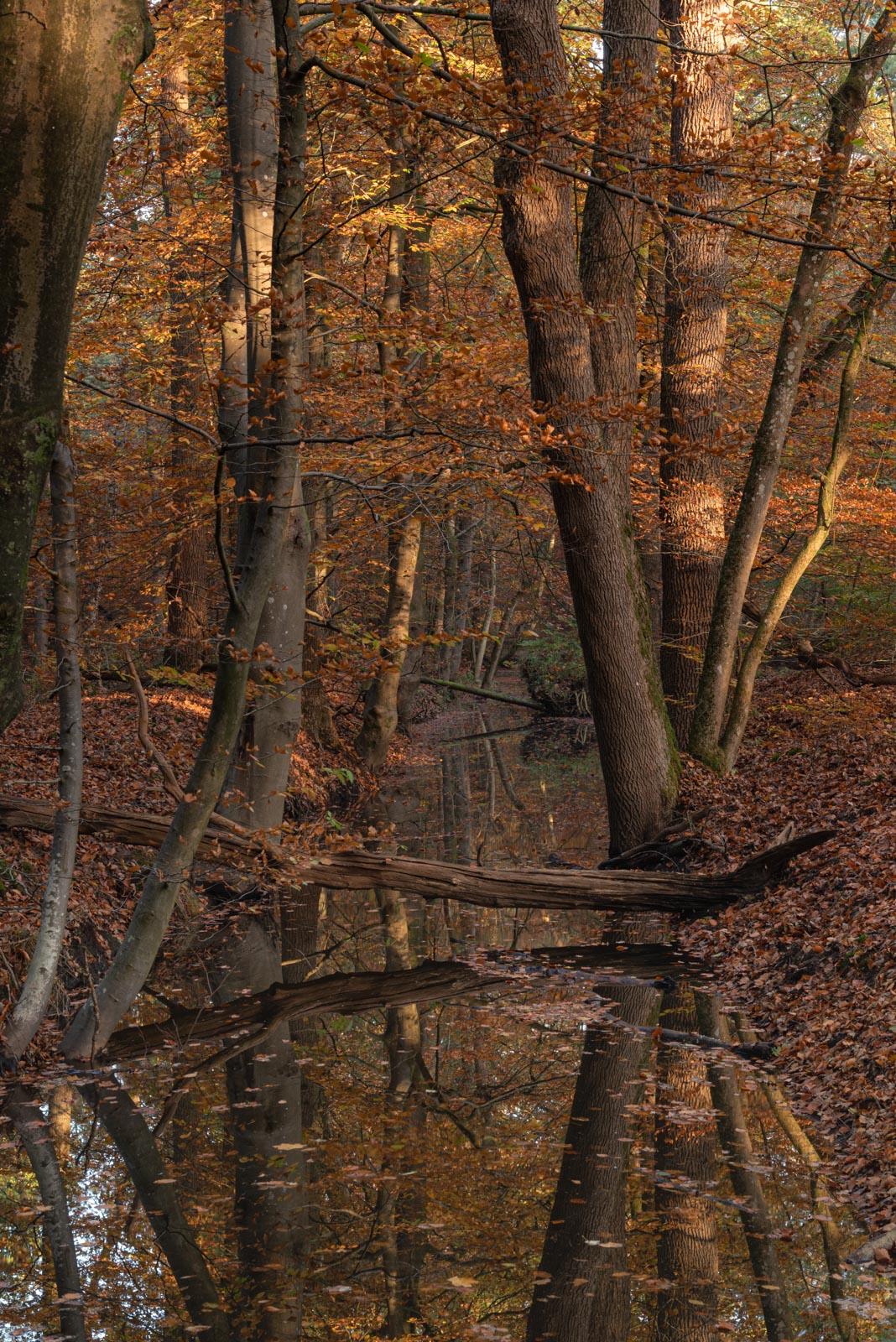 Leuvenumse Bos in de vroege ochtend zon 4920